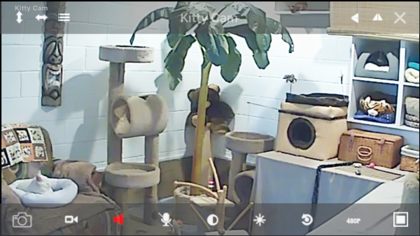 San Diego Cat sitting Kitty Cam